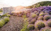 Tantalum Hills – Tantecs blühendes Biotop